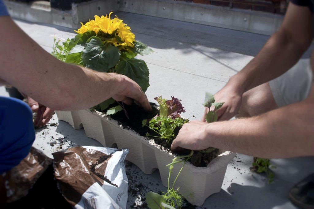 Deux personnes plantant dans une jardinière